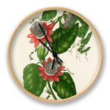 Passiflora alata Clock by Mary Lawrance