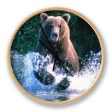 Grizzly Bear Running in Kinak Bay, Katmai National Park, U.S.A. Clock by Mark Newman