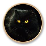 Domestic Cat, Black Persian Female at Night, Yellow Eyes Shining Ur af Jane Burton