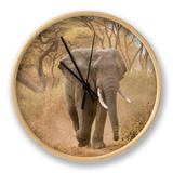 Loxodonta Africana, Lake Manyara National Park, Tanzania Ur af Ivan Vdovin