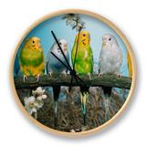 Six Budgerigars (Melopsittacus Undulatus) Clock by  Reinhard