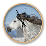 Grey Andalusian Stallion Head Profile While Cantering, Longmont, Colorado, USA Clock by Carol Walker