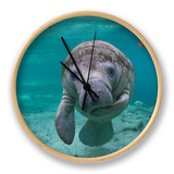 """Portrait of a West Indian Manatee or """"Sea Cow"""" in Crystal River, Three Sisters Spring, Florida Ur af Karine Aigner"""