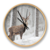 Red Deer (Cervus Elaphus) in Heavy Snowfall, Cairngorms National Park, Scotland, March 2012 Clock by Peter Cairns