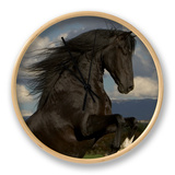 Black Peruvian Paso Stallion Rearing, Sante Fe, NM, USA Clock by Carol Walker