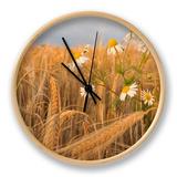 Scentless Mayweed (Tripleurospermum Inodorum) in a Ripe Barley Field. Perthshire, Scotland, July Clock by Fergus Gill