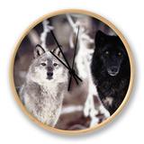 Grey Wolves Showing Fur Colour Variation, (Canis Lupus) Ur af Tom Vezo