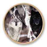 Grey Wolves Showing Fur Colour Variation, (Canis Lupus) Clock by Tom Vezo