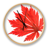 Japanese Maple Leaf in Autumn Colours Clock by Petra Wegner