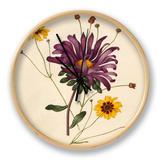 Callistephus chinensis, Coreopsis tinctoria Clock by Caroline Maria Applebee