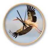 White Stork (Ciconia Ciconia) in Flight, Rusne, Nemunas Regional Park, Lithuania, June 2009 Ur af Hamblin