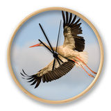 White Stork (Ciconia Ciconia) in Flight, Rusne, Nemunas Regional Park, Lithuania, June 2009 Clock by  Hamblin