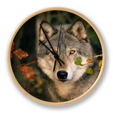 Grey Wolf Portrait, USA Clock by Lynn M. Stone