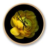 Ranunculus Close-Up Ur af Magda Indigo