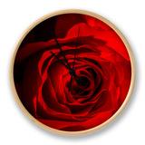 Red Rose Ur af Marco Carmassi