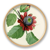 Passiflore ailée: Passiflora alata Clock by  Langlois