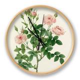 Rosier Pompon: Rosa Pomponia Uhr von  Victor