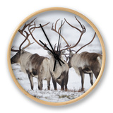 Three Reindeer (Rangifer Tarandus) in Snow, Forollhogna Np, Norway, September 2008 Klok van  Munier