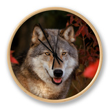 Grey Wolf Portrait, Minnesota, USA Clock by Lynn M. Stone