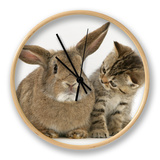 British Shorthair Brown Tabby Female Kitten Looking Inquisitivly at Young Agouti Rabbit Clock by Jane Burton