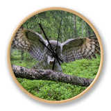 Great Grey Owl (Strix Nebulosa) Landing on Branch, Oulu, Finland, June 2008 Clock by  Cairns