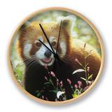 Red Panda (Ailurus Fulgens) an Endangered Species, Himalayas Clock by Adam Jones