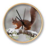 Red Squirrel (Sciurus Vulgaris) on Snowy Branch in Forest, Cairngorms Np, Scotland, UK, December Clock by Peter Cairns