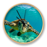 Sea Turtle, Swimming Underwater, Nosy Be, North Madagascar Clock by Inaki Relanzon