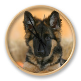 Domestic Dog, German Shepherd Alsatian Juvenile. 5 Months Old, with Rawhide Bone Clock by Petra Wegner