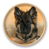 Domestic Dog, German Shepherd Alsatian Juvenile. 5 Months Old, with Rawhide Bone Clock by Petra Wegner