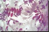 Purple Robinia Stretched Canvas Print by Jo Crowther