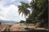 Tropical Bay I Stretched Canvas Print by Tony Koukos