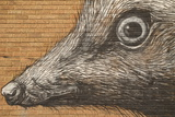 Graffiti Fotografiskt tryck av  Laiotz