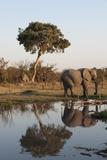 African Elephant Photographic Print by Sergio Pitamitz