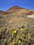 Painted Hills National Monument Photographic Print by Steve Terrill