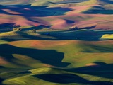 Rolling Green Hills of Spring Wheat Photographic Print by Terry Eggers