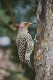 Flicker Photographic Print by Gary Carter