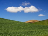 Spring Wheat Field and Clouds Photographic Print by Terry Eggers
