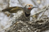 Gilded Flicker Photographic Print by Hal Beral