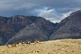 Cowboys and Cowgirls Riding along the Hills of the Big Horn Mountains Photographic Print by Terry Eggers