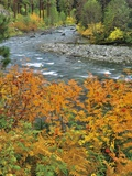 Autumn Color along Imnaha River Photographic Print by Steve Terrill