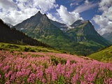 Fireweed Blooms in Glacier National Park Photographic Print by Steve Terrill