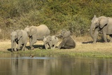 Elephant Herd at Waterhole Photographic Print by Richard Du Toit