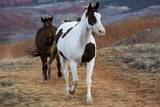 Horses at Full Gallop Photographic Print by Terry Eggers