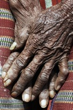 An Old Woman's Hands. Photographic Print by Skip Nall