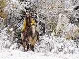 Cowgirl Riding in Autumn Aspens with a Fresh Snowfall Photographic Print by Terry Eggers