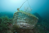 Fish Trap over a Coral Reef, Cap De Creus, Costa Brava, Spain Photographic Print by Reinhard Dirscherl