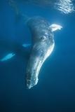 Humpback Whale (Megaptera Novaeangliae) Photographic Print by Reinhard Dirscherl