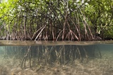 Split Image of Mangroves and their Extensive Prop Roots, Risong Bay, Micronesia, Palau Photographic Print by Reinhard Dirscherl