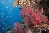 Fiji Coral Reef Photographic Print by Reinhard Dirscherl
